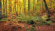 Ormanlarımız Çöp Alanlarına Dönüyor: Yedi Yılda 129 Katı Atık Tesisi Kuruldu