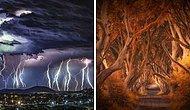 20 лучших фото природы от финалистов конкурса International Photography Awards 2020