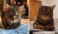 Сердитая мордочка, но любящее сердце: Бездомный кот с угрюмым лицом набирает популярность в Интернете