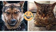 10 животных, которых все бесят (gif c недовольными котиками и не только)