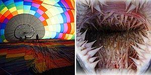 10 фотографий, которые покажут, что прячется внутри привычных предметов, животных и природных явлений