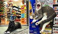 20 кошек в магазинах, которые ведут себя как хозяева этих заведений (Новые фото)