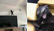 Кошки такие кошки: Владельцы публикуют фото своих пушистиков, которым наплевать на законы физики
