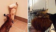 Что не так с моей кошкой: Владельцы делятся фотографиями своих странных питомцев