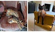 10 супергибких котов, которые чилят в сложных асанах и даже в ус не дуют
