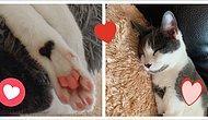 Женщина из США приютила котенка и обнаружила, что его шубка вся покрыта сердечками 💗💗💗