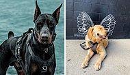 #ModelChallenge в Facebook: Люди делятся самыми модными фотографиями своих собак