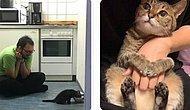 """25 самых очаровательных фото пушистиков, которые дадут вам ответ на вопрос """"Зачем мне заводить кошку"""""""