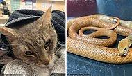 В Австралии домашний кот погиб, спасая двух детей от нападения ядовитой змеи