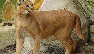 Ülkemizde Yaşadığına İnanamayacağınız 10 Hayvan Türü