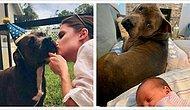 Лучшая четвероногая нянька: Заботливый питбуль помогает своей хозяйке ухаживать за новорожденным малышом