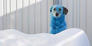 В Подольске, в одном из самых загрязненных городов России, собаки начали окрашиваться в розовый, зеленый и синие цвета