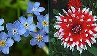 Baharda Açan Hangi Çiçek Seni Anlatıyor?
