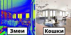 Проект Home Advisor решил показать, как 7 разных животных видят одну и ту же квартиру