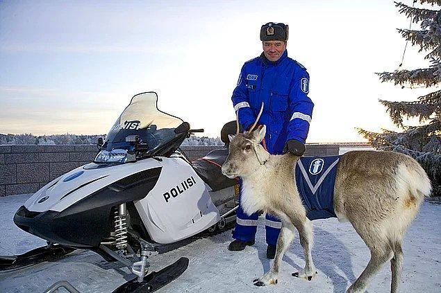 24. Ren geyikleri de polistir...