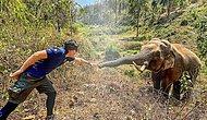 Слоны не забывают! Животное узнало ветеринара, лечившего его 12 лет назад в Таиланде