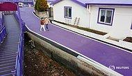Острова в Южной Корее выкрасили в пурпурный цвет, чтобы привлечь туристов, и это сработало!