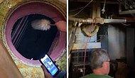 В Калифорнии женщина обнаружила бомбоубежище, спрятанное под крышкой люка в своем доме