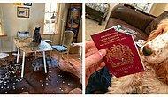 Еще 12 бессовестных домашних животных, которые ни капельки не жалеют о своих поступках (Продолжение)