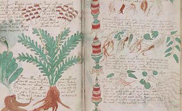 Beşinci bölümde kırmızı, yeşil ve mavi kapların içinde yer alan yüzü aşkın bitkisel ilaç yer alıyor.
