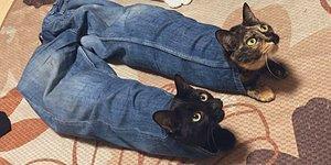 20 наглых кошек, которые обожают сидеть там, где это не положено