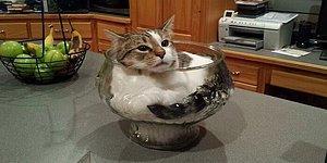 20 наглых кошек, которые обожают сидеть там, где это не положено (Продолжение)