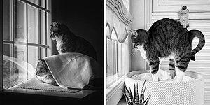 Кошки любят окна, и это факт: 15 фото от фотографа, которая нашла свое вдохновение в пушистиках на подоконниках