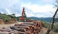 Yetki Turizm Bakanlığı'na Geçiyor: Koruma Altındaki Doğal SİT Alanları ve Milli Parklar İnşaata Açılıyor