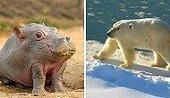 Вы будете смеяться вслух! Аккаунт в Instagram показывает, как животные выглядели бы без шеи (20 фото)