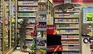Комодский варан зашел в супермаркет в Таиланде и до смерти напугал покупателей