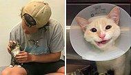 15 самых милых и позитивных фото с животными, которых только что спасли и приютили в их новый дом
