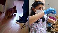 Она знала к кому обратиться: В Турции бездомная кошка пришла со своими котятами к ветеринарам