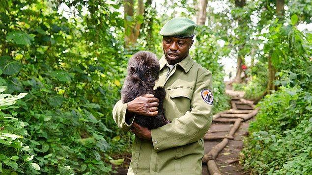 11. Virunga