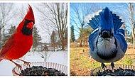 Жительница США установила в своем саду кормушку для птиц и теперь делится в Сети забавными фото лесных гостей (10 фото)