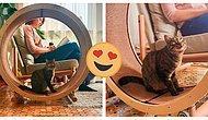 Дизайнеры изобрели идеальное кресло для котоманов, в которое встроено беговое колесо для вашего любимца (8 фото)