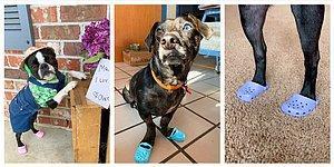 Все покупают кроксы для своих собак! А вы уже успели прибарахлиться? (10 фото)