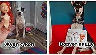 Доска позора наших домашних животных: 10 уморительных фото