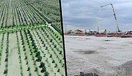 AKP'li Belediyeye Devredilirken İmarı Değiştirilen Aslım Ormanı'nda Ağaçlar Söküldü: Bir Kısmı Satılacak