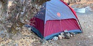 Американка, пропавшая в лесу 6 месяцев назад, была найдена живой: она жила в палатке и питалась мхом