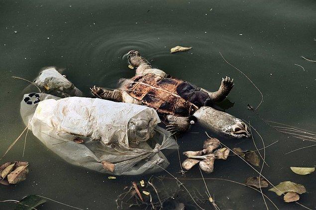 Vücutlarında yüksek oranda toksik plastik atık bulundu
