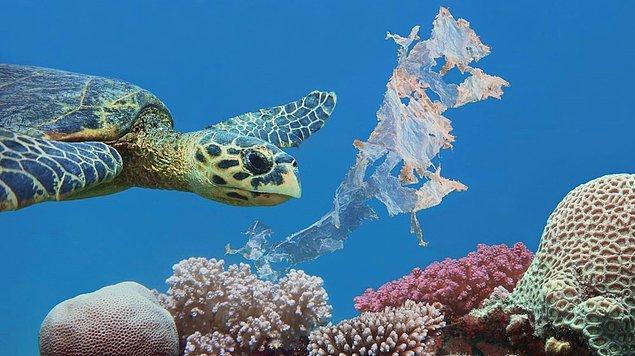 Kaplumbağaların üremesini etkileyebilir