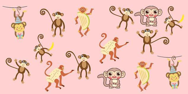 1. Hangi maymunun ikizi yok?