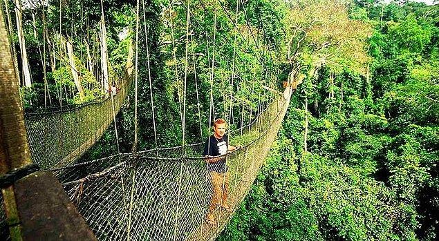 11. Kakum Canopy - Kakum Milli Parkı, Gana