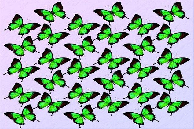 1. Farklı kelebeği bulabildin mi?