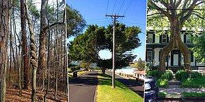 22 дерева, которые наплевали на чужое мнение и делают, что вздумается