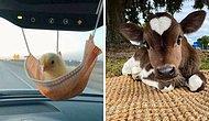 20 самых милых фото с животными, которые сделают ваш день еще лучше