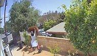 Видео, на котором 17-летняя девочка толкает медведя, чтобы защитить своих собак, набирает бешеные просмотры