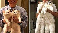 Из крошечных котят в настоящих кошек: 15 фото пушистых четвероногих до и после того, как они выросли