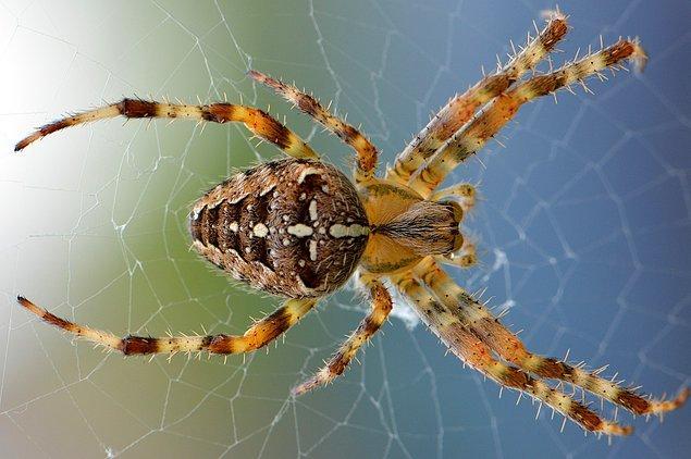 2. Örümcekler