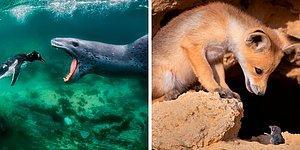 Конкурс фотографий BigPicture Natural World 2021 обьявил 20 лучших снимков матери-природы